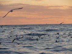 Birds off Gillon Point, Agattu Island